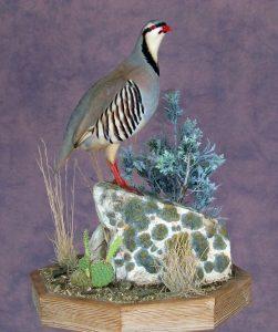 chukar-auction