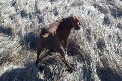 Susie @ Muddy Roads